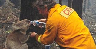 Így segíthetsz Te is az ausztráliai erdőtüzeknél!